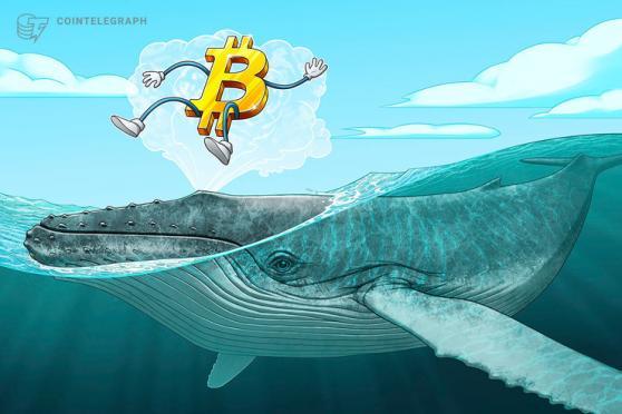 「ミリオネア」クジラ、過去25日間で9万BTCを買い増す